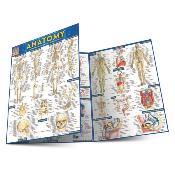product-image-quickstudy-anatomy-laminated-study-guide-01